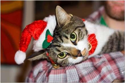 cat-christmas-lying